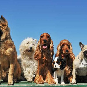 כלבים